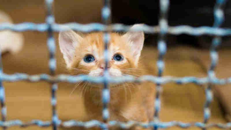 CCZ de Fernandópolis (SP) disponibiliza cães e gatos para adoção