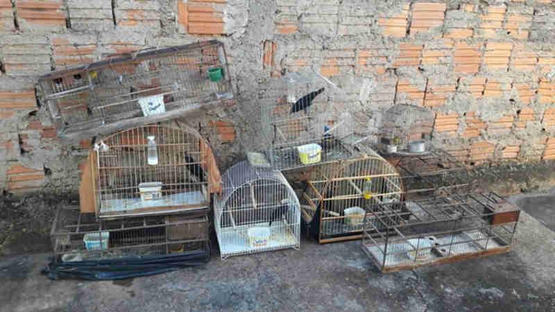 Homem é multado em R$ 16 mil por manter pássaros em cativeiro e ter carne de animais silvestres em Ilha Solteira, SP