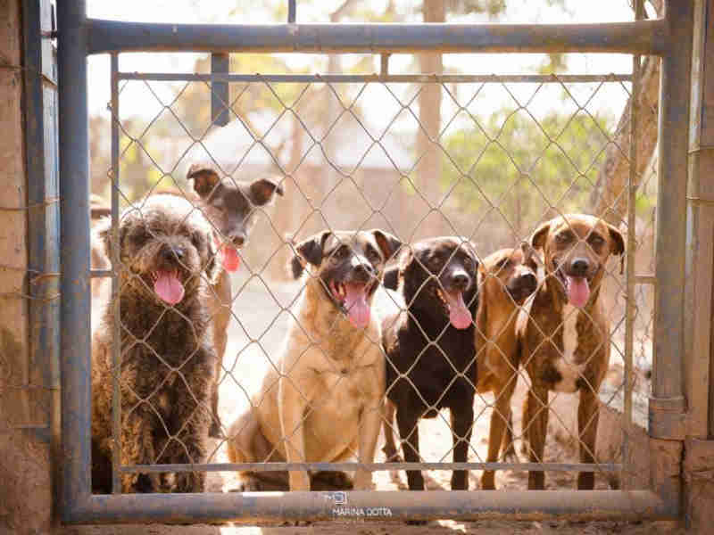 Parceria entre a ASPA Itu e a Izzi Help beneficia animais