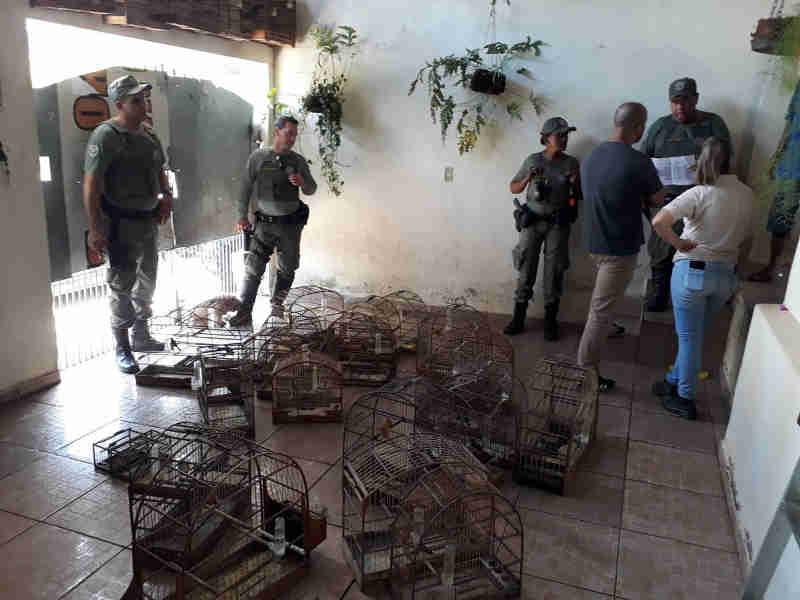 Guarda apreende 29 pássaros nativos e detém aposentado em Limeira, SP