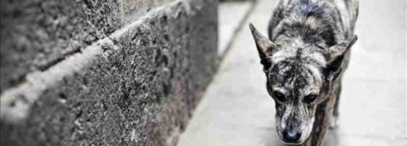 TJ mantém condenação que obriga Prefeitura de Marília (SP) a implantar serviço de apreensão de animais