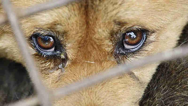 Abandono e maus tratos de animais é crime, mas uma prática comum em Pinhal, SP