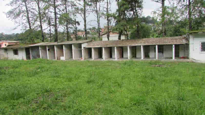 Grupo faz vaquinha para criar santuário para animais abandonados em Rio Grande da Serra, SP