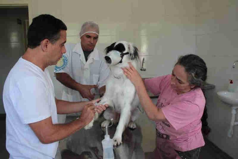 Prefeitura de Votorantim (SP) realiza cerca de 50 castrações mensais gratuitas de cães e gatos