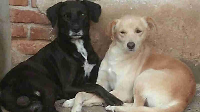 Protetora de animais falece e deixa 'órfãos' 32 cães em Araraquara, SP