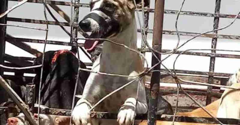 Associação de SP repudia morte de cães em Igaracy, PB