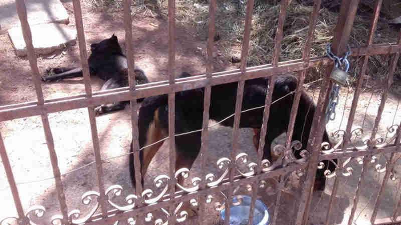 Polícia Ambiental evita morte de cachorro por maus-tratos em Atibaia, SP