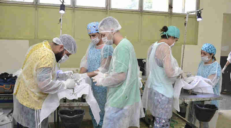 Cajamar (SP) realiza mutirão de castração de animais