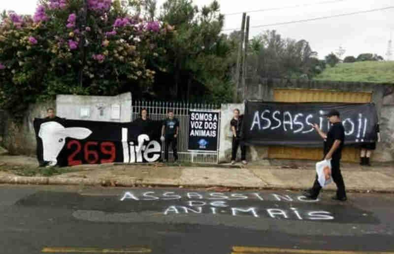 Protetores fecham cerco contra 'matador de gatos' em Campinas, SP