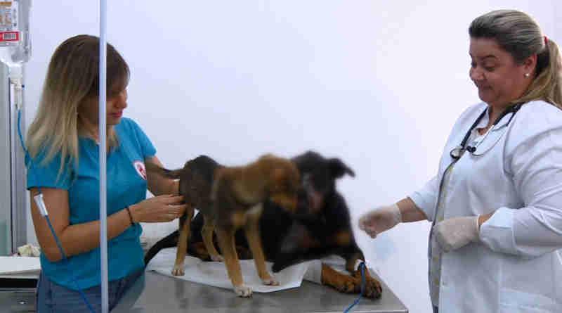 Cadela leva 12 facadas e é resgatada por ONG em Campinas, SP
