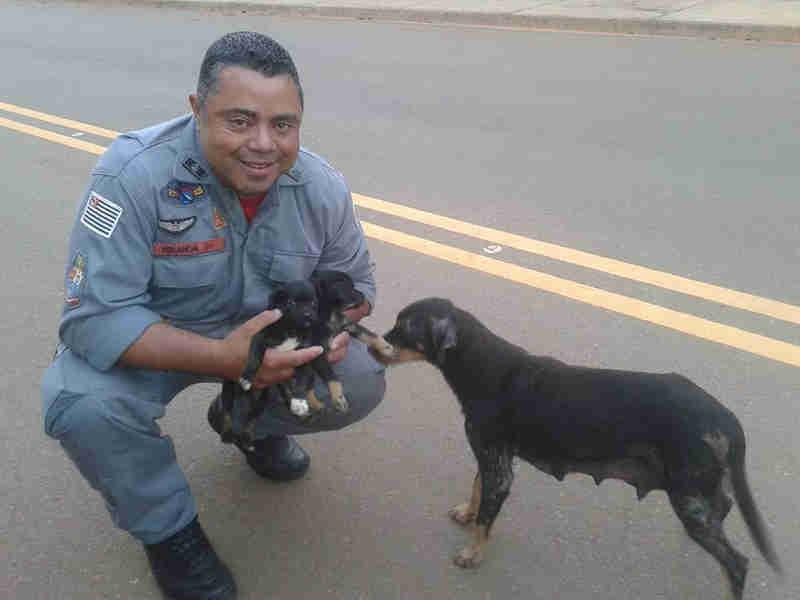 Cadela 'agradece' Corpo de Bombeiros após resgate de filhotes que caíram em bueiro