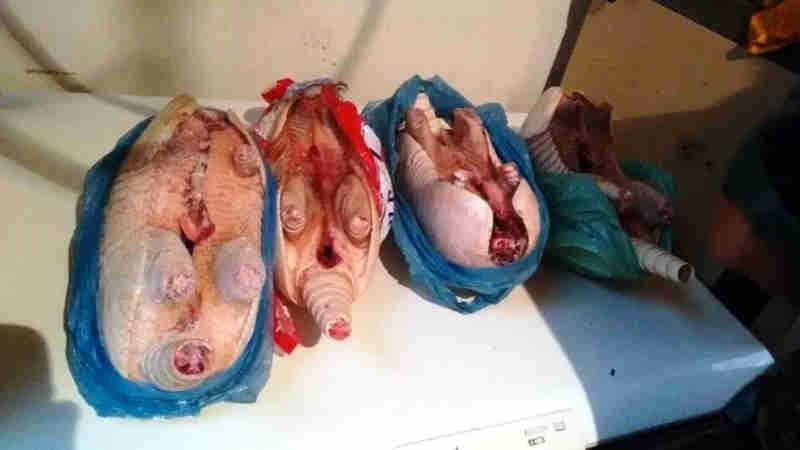 Comerciante é preso por vender carne de animais silvestres em bar em Iguape, SP