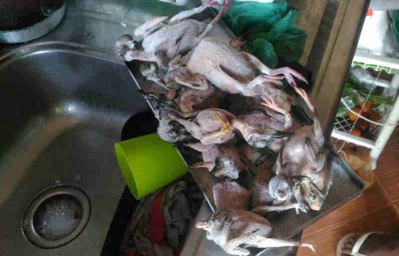 Aves nativas da região foram encontradas sendo depenadas por ambulante (Foto: Divulgação/Polícia Militar Ambiental)