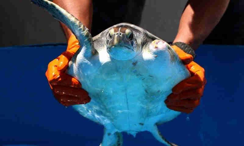 Gremar abre curso de socorristas de fauna em risco em Itanhaém, SP
