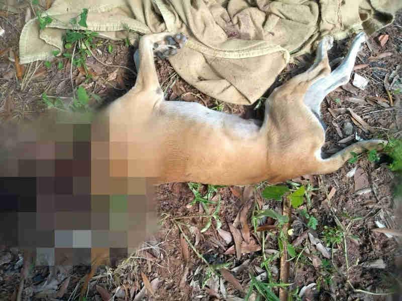 Adolescente degola cão e deixa cabeça no quintal de ex-namorada após briga