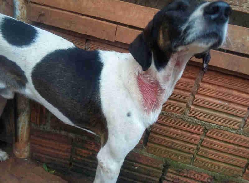 Polícia Ambiental resgata cães e pássaros com sinais de maus-tratos em Itararé, SP