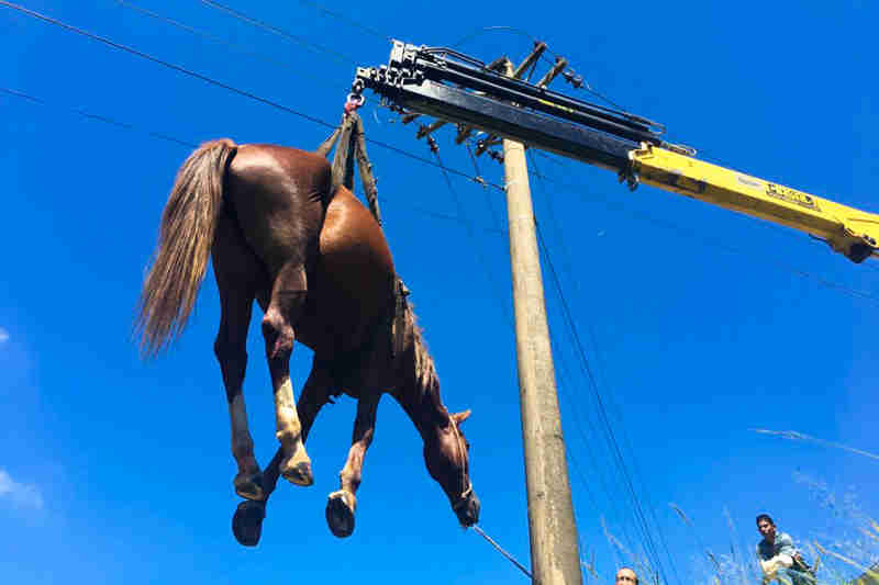 Cavalo é resgatado após trabalho conjunto entre Prefeitura e Bombeiros de Itupeva, SP