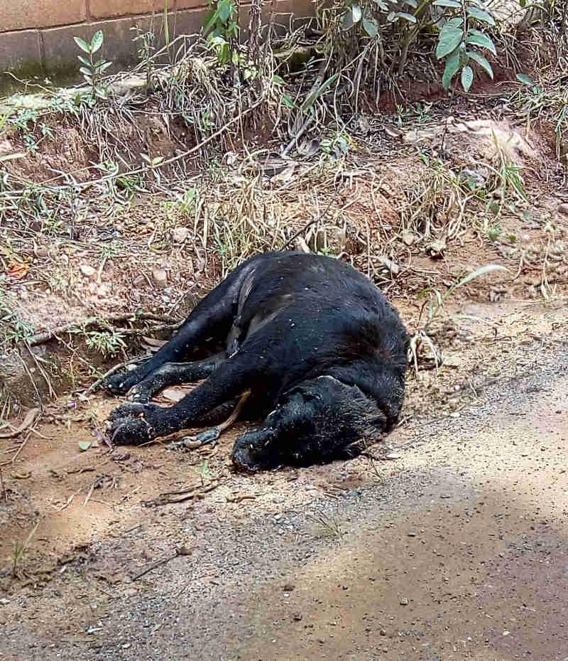 O IMPASSE que deixa animais de rua sem acolhimento em Jundiaí, SP