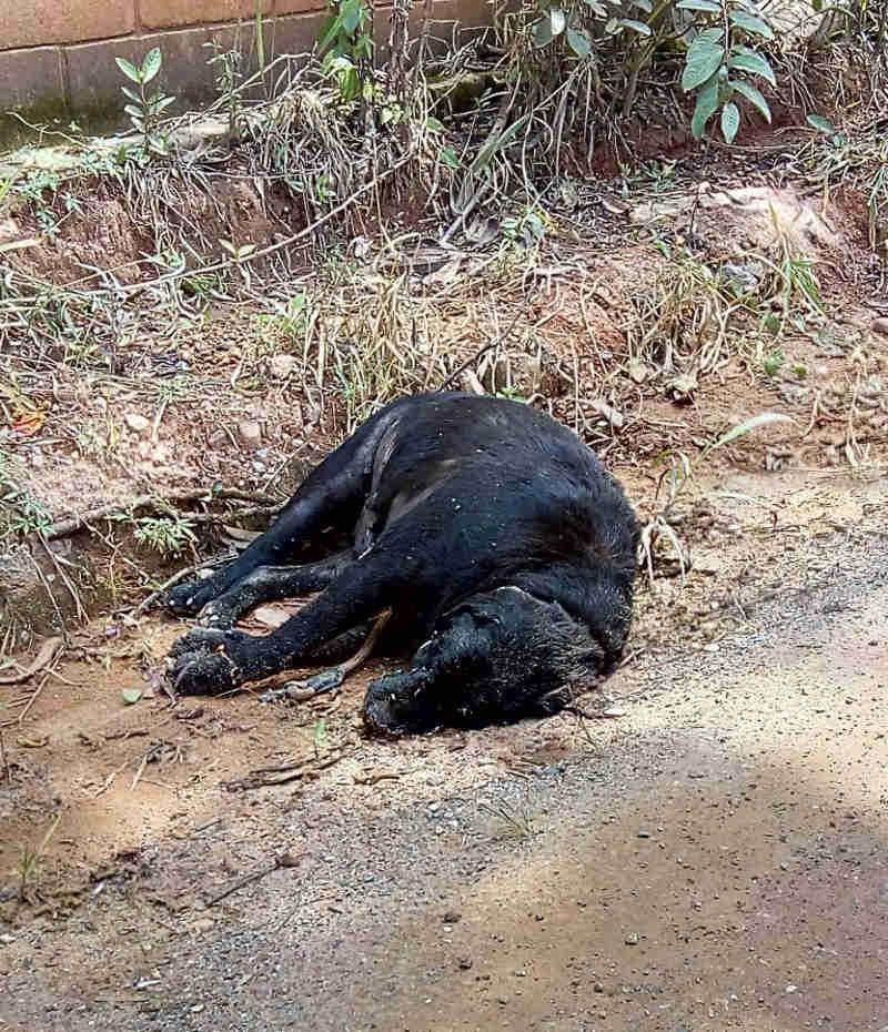 Abandonos, morte e tristeza rondam portão da UIPA, em Jundiaí, SP