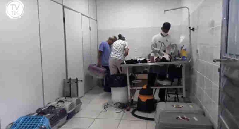 Debea faz mutirão de castração de animais para cuidadoras em Jundiaí, SP