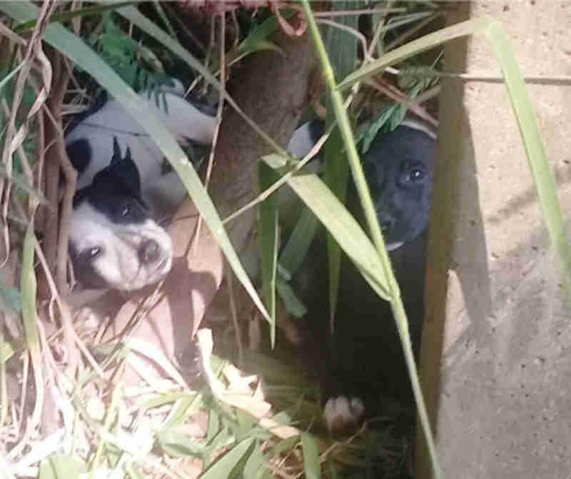 21 animais abandonados no portão da UIPA desde o início do ano, em Jundiaí, SP
