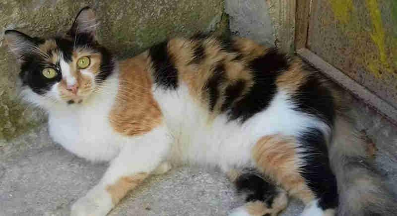 SP: mais de 50 gatos estão presos dentro do Parque Independência, em SP