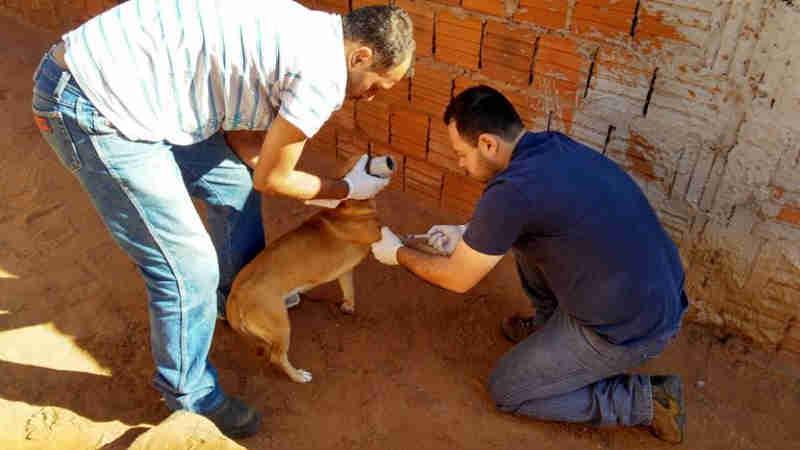 Em oito meses de serviço veterinário, CCZ de Mirandópolis (SP) realizou mais de 1,5 mil procedimentos