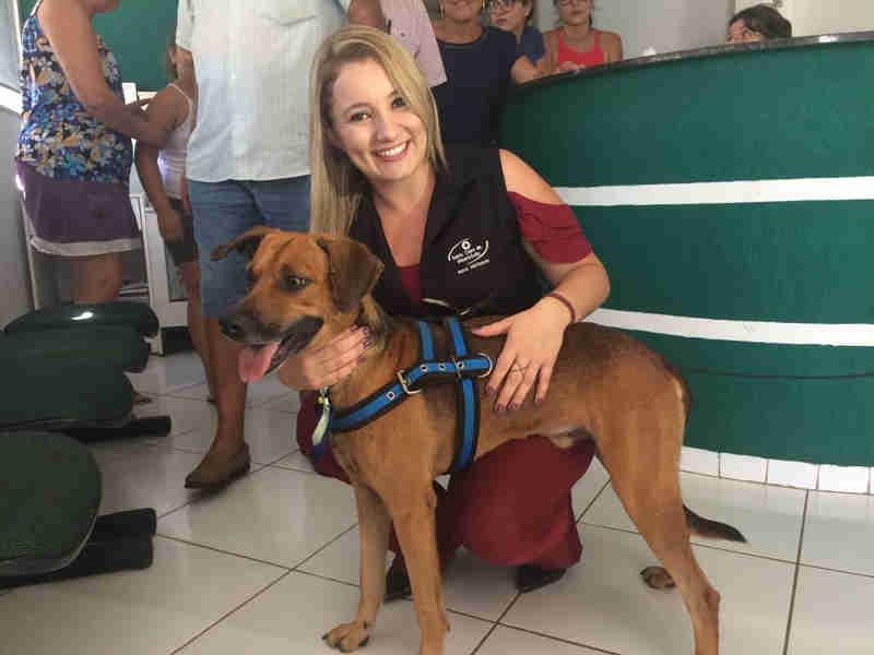 Cão é adotado após ficar quatro meses na frente de hospital à espera de tutor que morreu