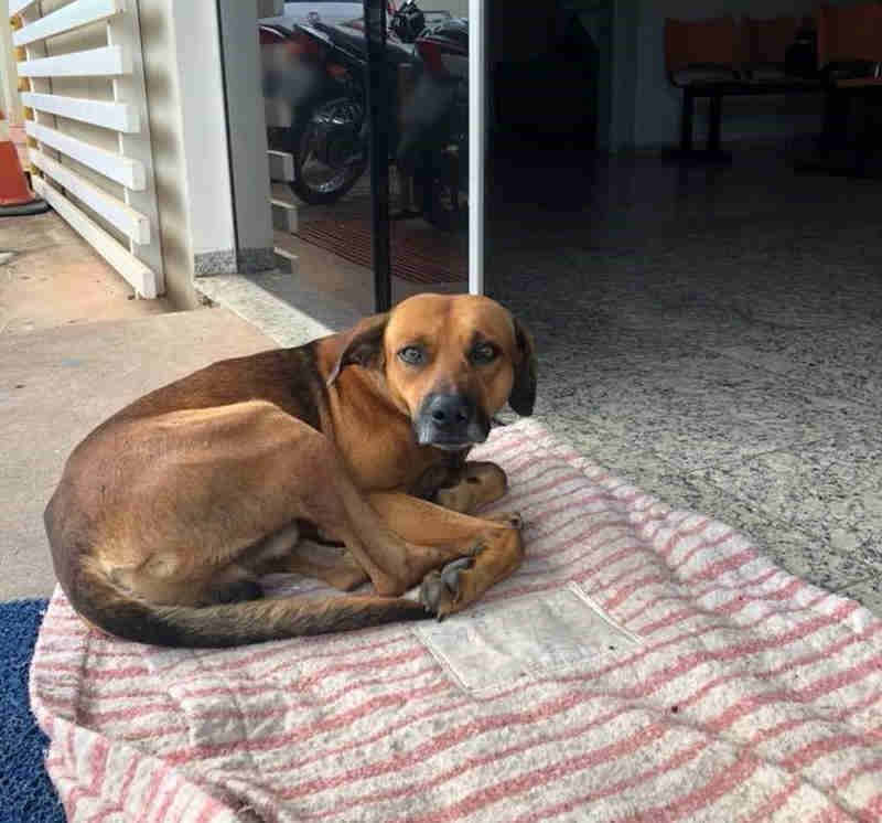Cachorro espera há quatro meses na frente de hospital por tutor que morreu