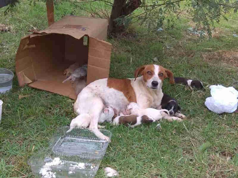 Moradores se mobilizam para doação de cães abandonados em Piracicaba, SP