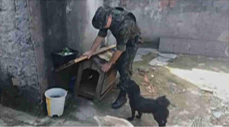 Polícia encontra casa em Poá (SP) onde cachorros sofriam maus-tratos