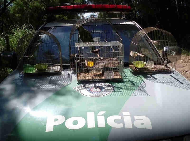 Morador é multado em R$ 2 mil por manter pássaros em residência sem autorização ambiental