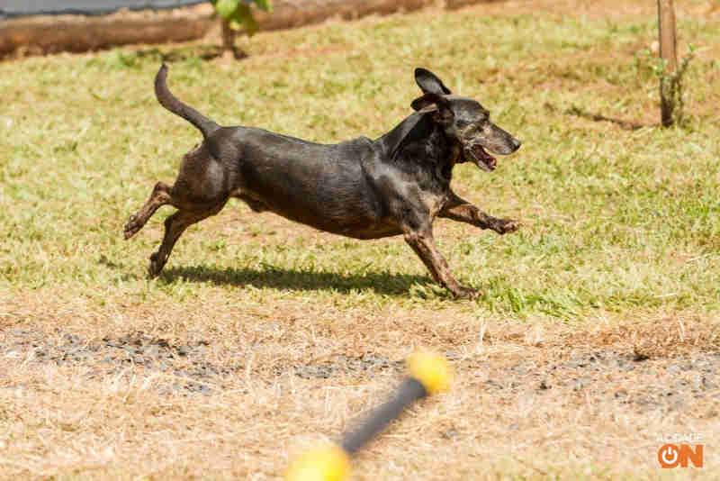 Cachorros idosos não são adotados em novo evento da Coordenadoria de Bem Estar Animal de Ribeirão Preto, SP