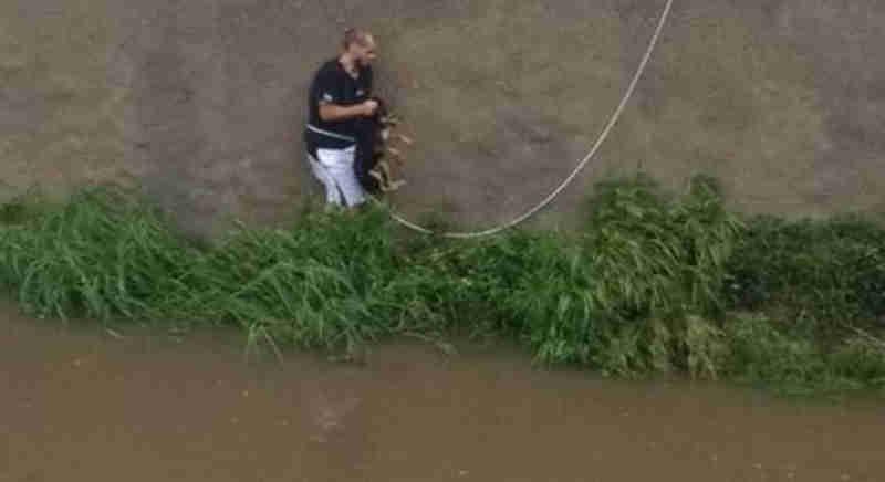 Cachorro cai em rio e é salvo por homem que passava pelo local