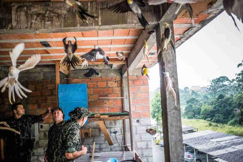 SP: Apreensão de animais silvestres na capital cresce 37%