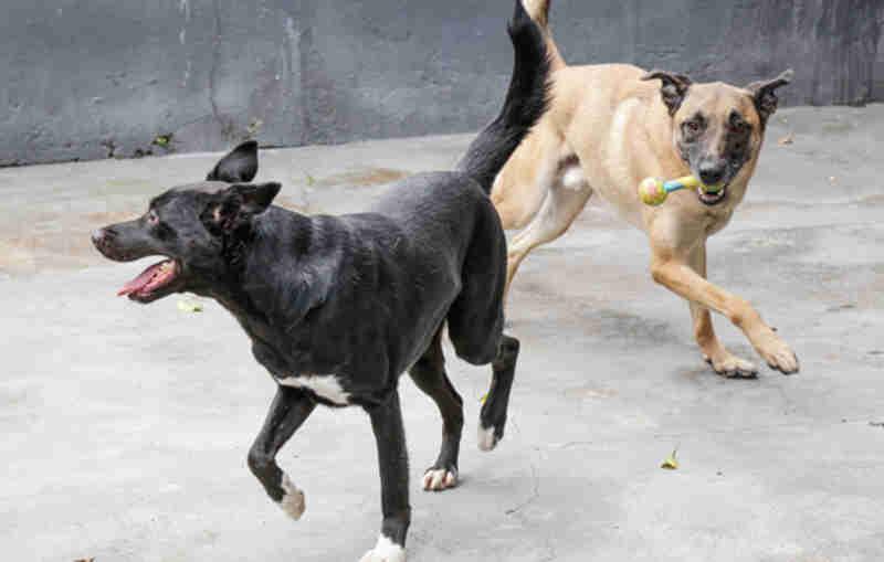 São Caetano (SP) tem feira de adoção de cães e gatos neste sábado no CCZ
