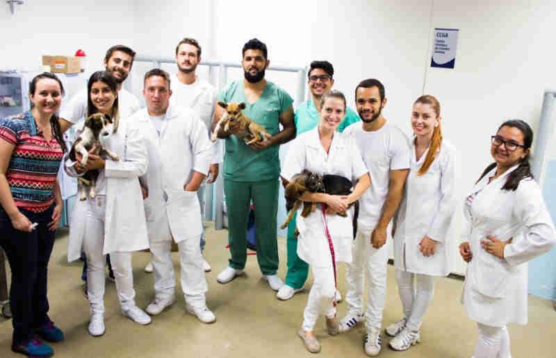 Hospital Veterinário Universitário da UNICEP e ONG ASA castram 23 animais de rua em São Carlos, SP