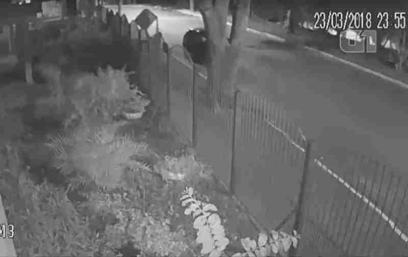 Câmera flagra abandono de filhotes de cachorro em igreja em São José dos Campos, SP; veja