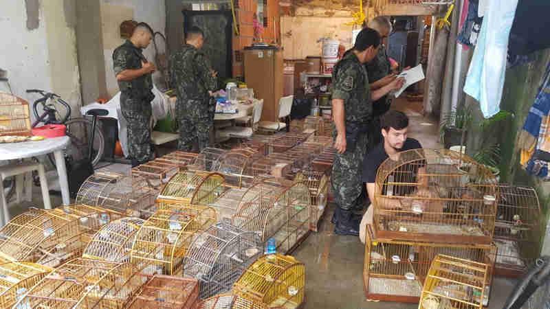 Casal é multado em R$ 231 mil por manter pássaros silvestres em casa