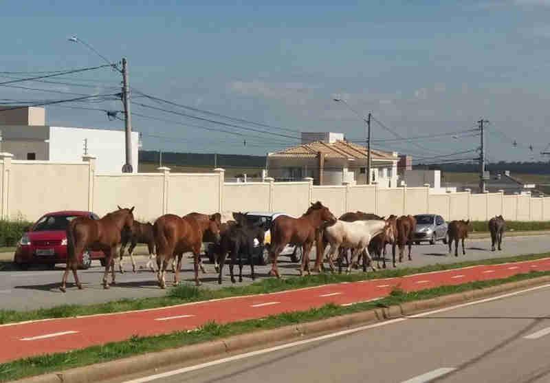 Cavalos foram flagrados na avenida Wanel Ville em Sorocaba (Foto: Arquivo Pessoal)