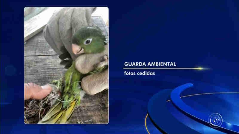 Pássaros são resgatados com ferimentos causados por linha de pipa com cerol