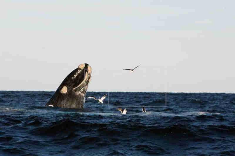 Três baleias pigmeias morrem no sul de Taiwan; uma tinha sacolas plásticas no estômago