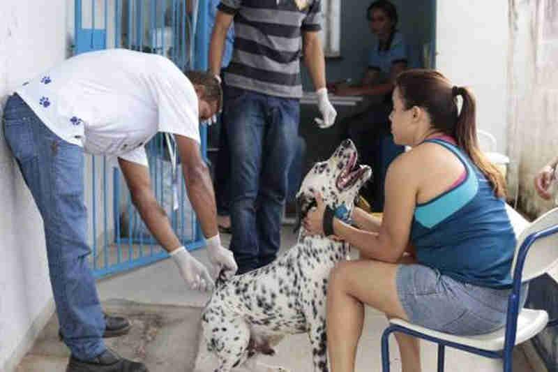 Araguaína (TO) deve vacinar cerca de 26 mil cães e gatos contra a raiva