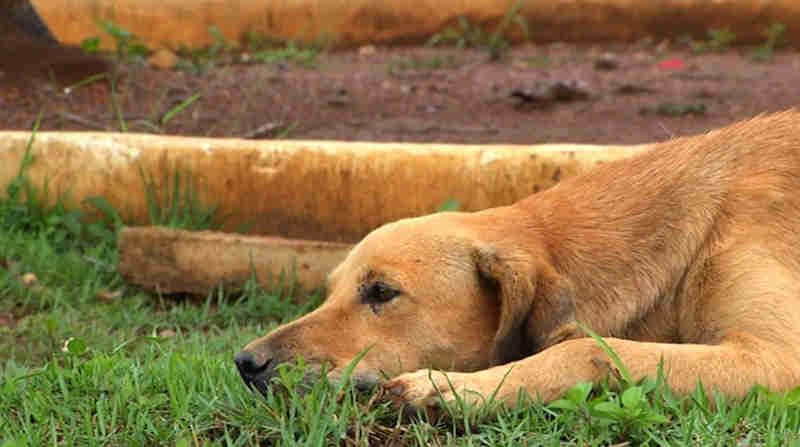 Cadelas passam a morar em cemitério após morte de tutores: 'não perdem um enterro'