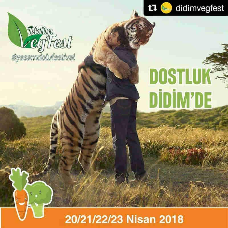 Primeiro festival vegano da Turquia retorna em abril e quer atrair 200 mil pessoas