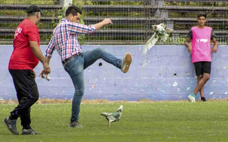 Clube de futebol uruguaio é punido após dirigente dar chute em galinha jogada pela própria torcida