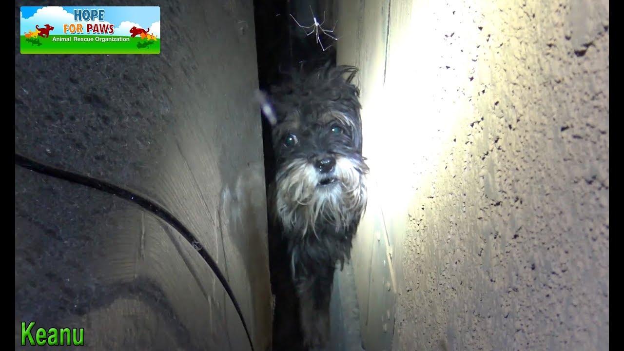 Cão abandonado se escondeu em um lugar onde os resgatistas não conseguiam alcançar, então eles tiveram que improvisar…