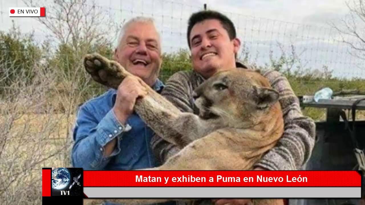 Profepa denunciou aos caçadores do puma em Nuevo León, México