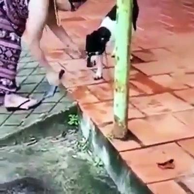 Vídeo de mulher cortando pata de cachorro vivo com facão choca a internet