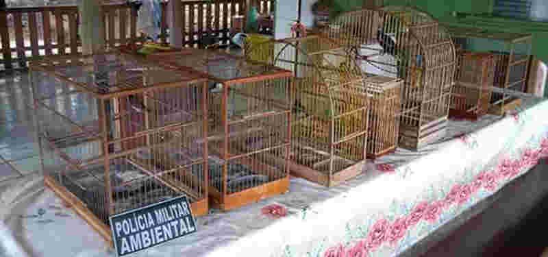 Polícia Militar e Ibama prendem homem com dez animais silvestres em Acrelândia, AC